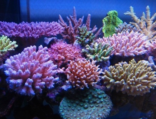 Eight tips for an enviable marine aquarium