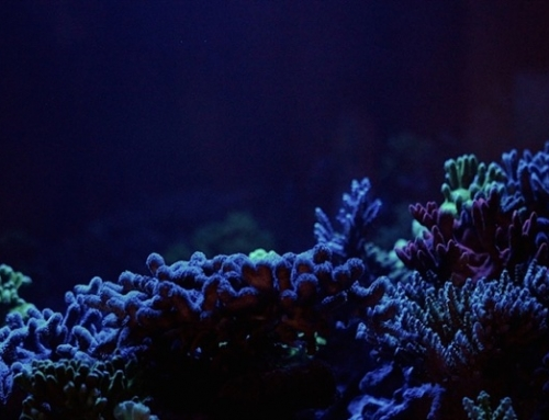 Five essential equipments for your reef tank