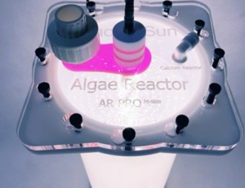 Algae Reactor, a biological filter and much more
